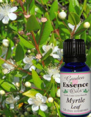 Garden Essencw Oils Myrtle