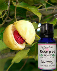 Garden Essence Oils Nutmeg