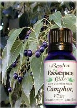 Camphor, 15 ml. Garden Essence Oils Camphor oil,camphor essential oil