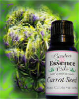 Carrot Seed, 15 ml. Garden Essence Oils Carrot Seed,essential oils for skin care