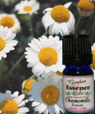 Chamomile, Roman, 15 ml. Garden Essence Oils Chamomile Roman,essential oils for stress