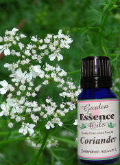Coriander, 15 ml. Garden Essence Oils Coriander,essential oils to remove toxins,essential oils for inflammation