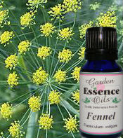 Fennel, 15 ml. Garden Essence Oils Fennel