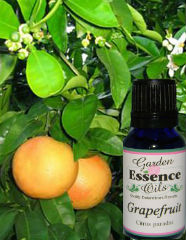 Grapefruit - Pink, 15 ml. Garden Essence Oils Grapefruit