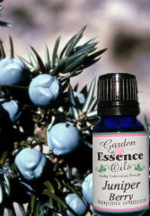 Juniper Berry, 15 ml. Garden Essence Oils Juniper Berries,juniper berry essential oil