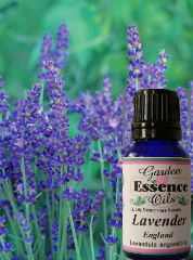 Lavender, 15 ml. (English) Garden Essence Oils Lavender,lavender essential oil
