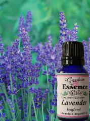 Garden Essence Oils Lavender