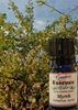 Myrrh, 15 ml. Garden Essence Oils Myrrh,myrrh essential oil