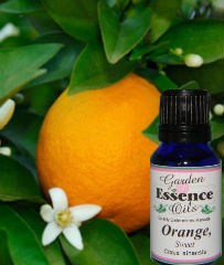 Orange, Sweet 15 ml. Garden Essence Oils Orange,orange essential oil