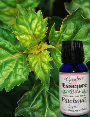 Patchouli, 15 ml. Garden Essence Oils Patchouli,patchouli essential oil