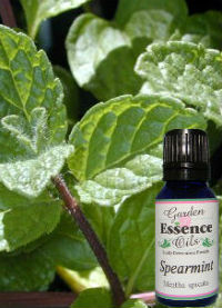 Spearmint, 15 ml. Garden Essence Oils Spearmint,spearmint essential oil