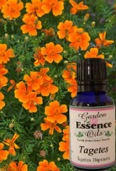 Tagetes, 15 ml. Garden Essence Oils Tagetes,Tagetes essential oi