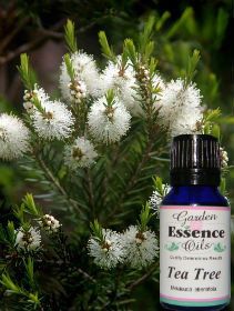 Tea Tree, 15 ml. Garden Essence Oils Tea Tree oil,Tea Tree essential oil