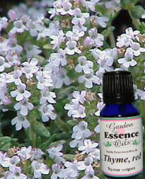 Thyme - Red, 15 ml. Garden Essence Oils Thyme,Thyme essential oil