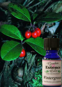 Wintergreen, 15 ml. Garden Essence Oils Wintergreen,wintergreen essential oil