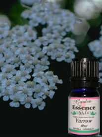 Yarrow, 5 ml. Garden Essence Oils Yarrow,yarrow essential oil